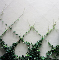Green Wall - Cable Trellis Systems