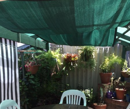 "Thanks Bill for your photo of your 2x4m Green shade sail. ""I wanted this size to be erected inside our existing shade house to give more protection during our scorching summer heat not only to protect us but also the plants.""\\n\\n29/12/2015 9:16 PM"